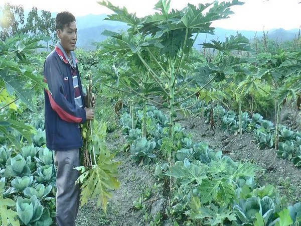 Manipur farmers reap benefits of integrated farming