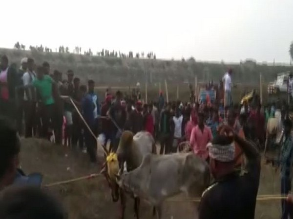 People gathered in Andhra Pradesh's Chittoor district on Sunday for  Jallikattu sport. Photo/ANI