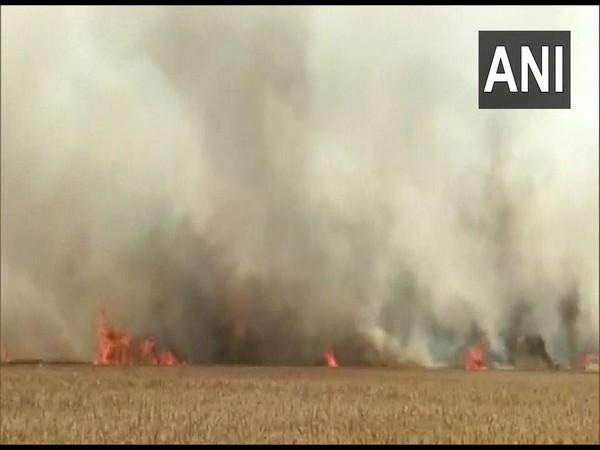 Wheat crop destroyed in fire at Khatima area in Uttarakhand's Udham Singh Nagar district. (Photo/ ANI)