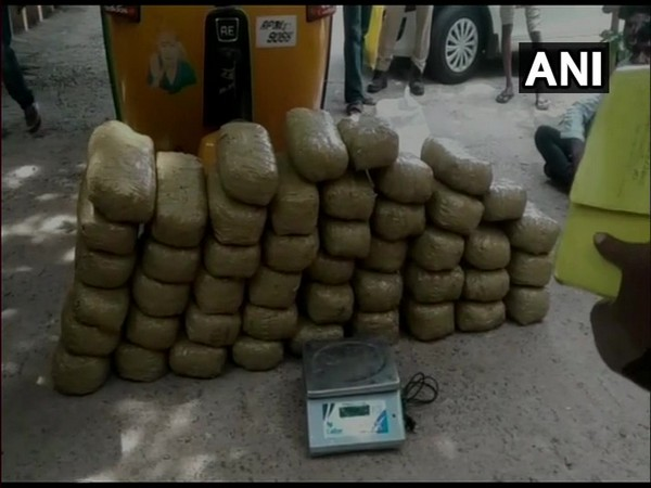 Cannabis seized by Andhra Pradesh police on Friday. Photo/ANI