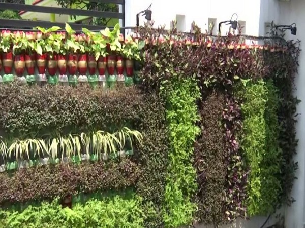 A visual of the vertical gardens in Jammu. (Photo/ANI)