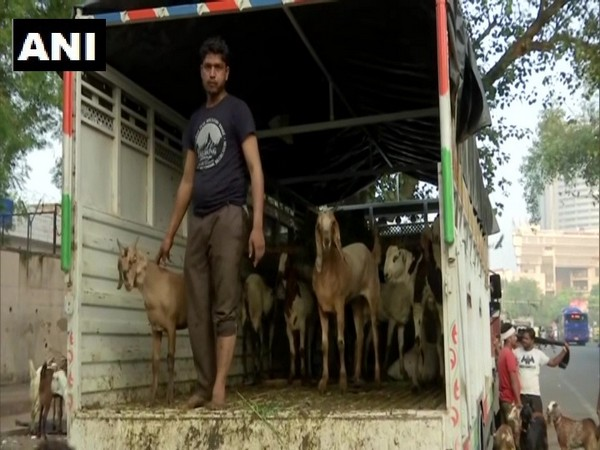 Traders bring goats to Delhi for sale ahead of Bakra Eid this year. (Photo/ANI)