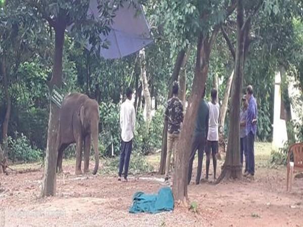Elephant Gouri died due to herpes virus at Nandankanan zoo in Odisha on Friday. Photo/ANI