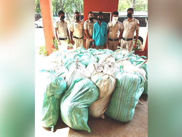 Haryana Police seizes 822 kg Ganja worth crores and arrests one. (Photo/ANI)