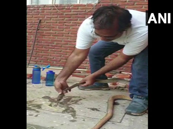 Sher Singh, an Income-Tax officer, rescued a snake, which had pesticide thrown on it