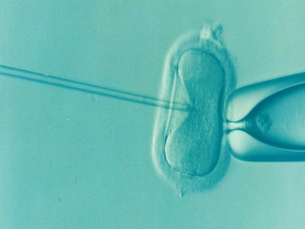 Women don't regret embryo testing before IVF