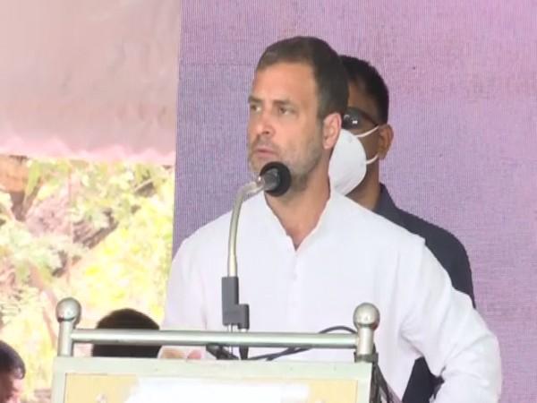 Congress leader Rahul Gandhi (Photo/ANI)