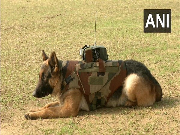 An Army dog fitted with the latest gadget.