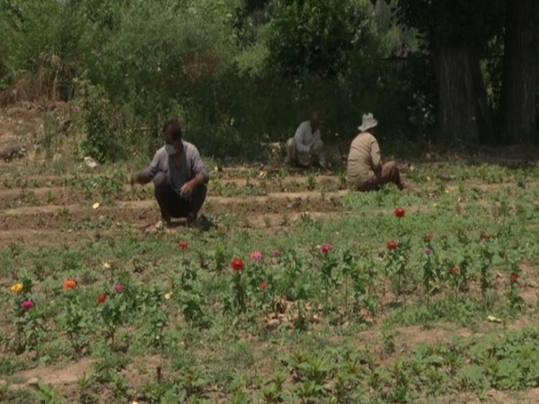 A floriculture park revives in Srinagar [Photo/ANI]
