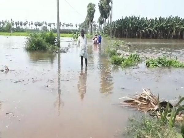 A man surveys his flooded farmland. (Photo/ANI)
