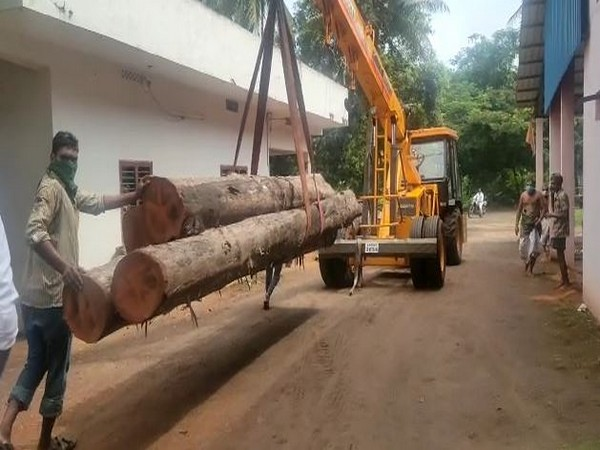 The new chariot for the Antarvedi Sri Lakshmi Narasimha Swamy temple will be made using teak wook logs (Photo/ANI)