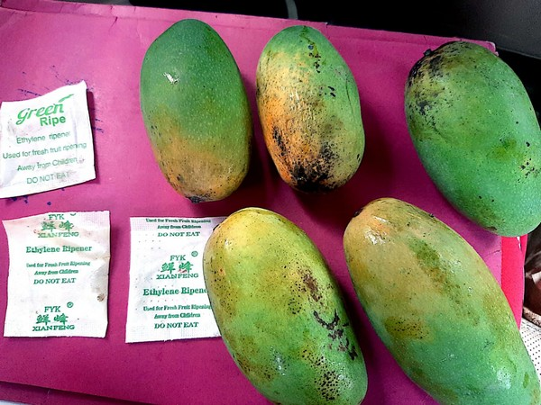 A photo of mangoes ripe by using China made chemicals in  Sambhal [Photo/ANI]