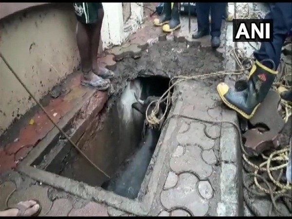 A team of fire brigade along with locals while rescuing the buffalo which fell into a gutter in Mumbai's Kandivali West area on Wednesday. (Photo: ANI)