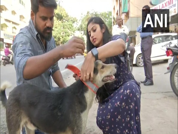 Hyderabad-based NGO 'Collarup' is tagging stray dog with fluorescent collar. (Photo/ANI)