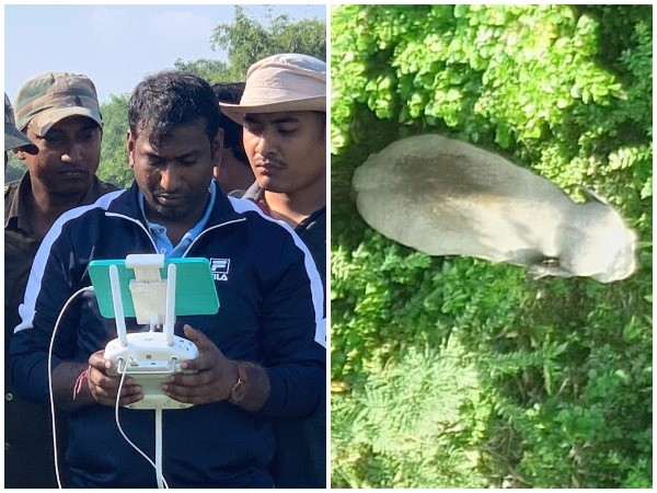 A team of officials led by Akash Deep Baruah, Chief Conservator of Forest of Lower Assam Zone, has successfully traced the elephant in Assam's forest on Friday. (Photo/ANI)