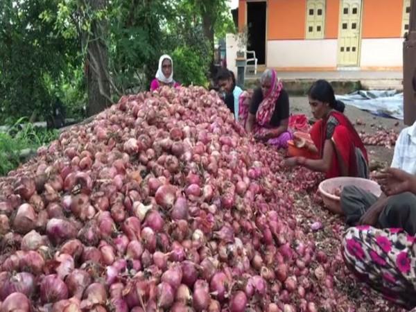 Onion prices have surged in Nashik, Maharashtra. (Photo/ANI)