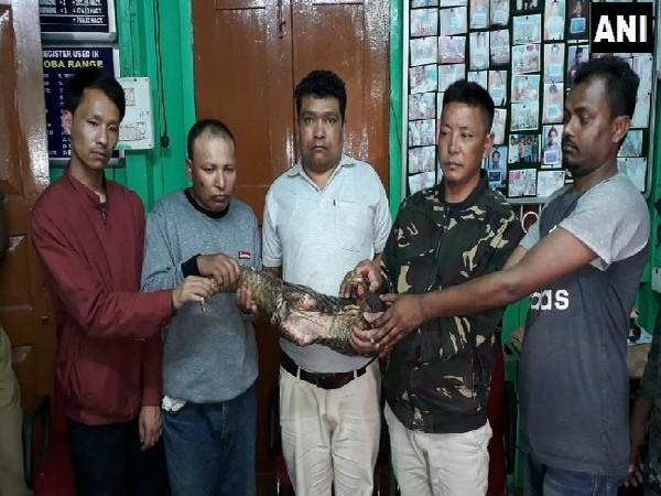 Forest officials seize a Pangolin in Jalpaiguri, West Bengal on Tuesday Photo/ANI.