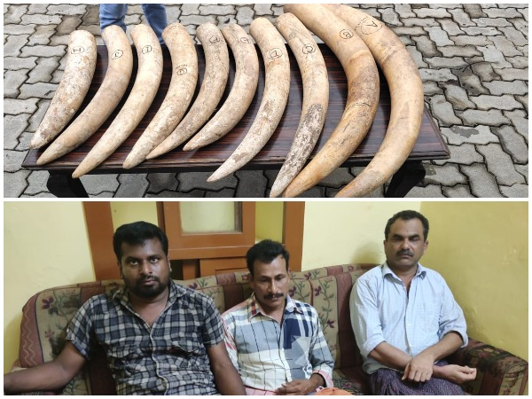Five pair of ivory seized by forest officials in Dakshina Kannada district, Karnataka on Wednesday. (Photo/ANI)