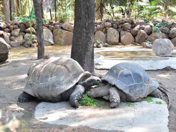 121-year-old Galapagos Giant Tortoise at Nehru Zoological Park, Hyderabad (Photo/ANI)