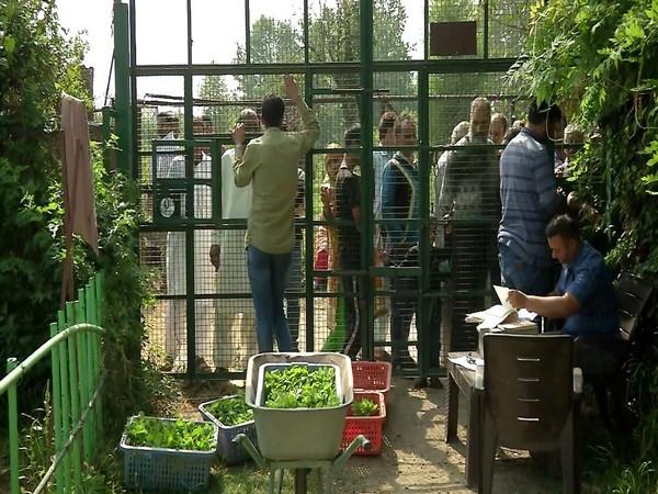 Centre asks locals in Kashmir to set up kitchen gardens [Photo/ANI]