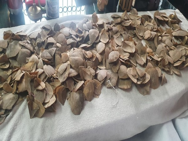 Pangolin scales seized by security personnel in Siliguri