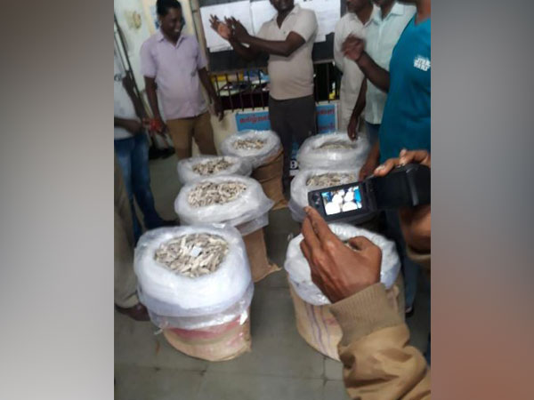 Coastal Security Police Wing of Tamil Nadu seized 350 kg of sea cucumbers and arrested two people. Photo/ANI