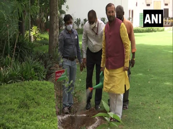 Union Minister of Environment, Forest and Climate Change Prakash Javadekar while planting 'Parijaat' saplings at his residence (Photo/ANI)