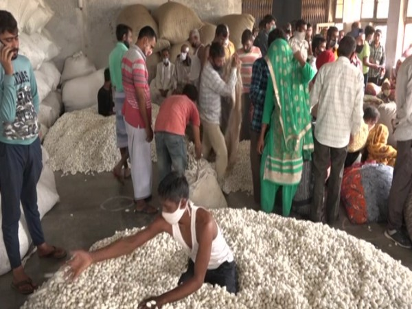 A visual of the Silk Cocoon Auction market in Udhampur. (Photo/ANI)