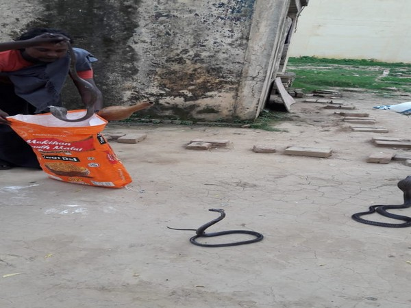 Visuals of Snakes captured in Lucknow jail on Tuesday.