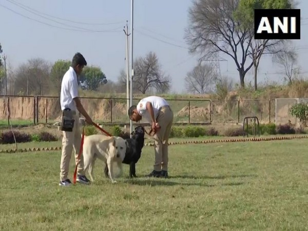 Snnifer dogs recover narcotics in Jammu and Kashmir. Photo/ANI