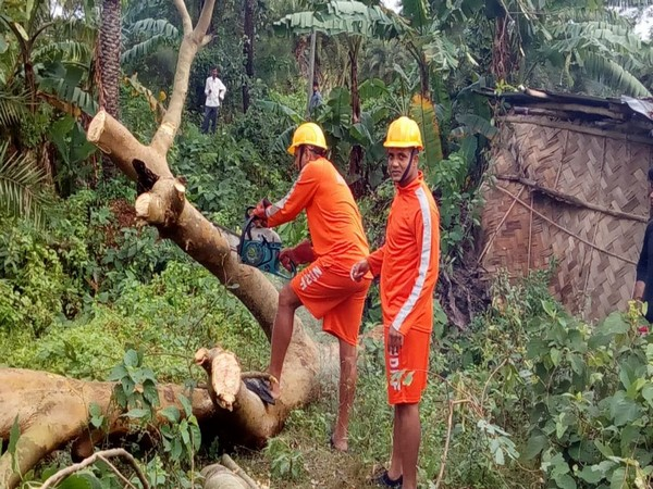 Trees uprooted in South 24 Parganas due to cyclone Bulbul. [Photo/ANI]