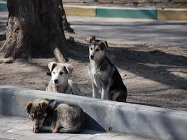 Around 98 per cent of the society members had passed the resolution to levy fine for feeding dogs in the society premises.