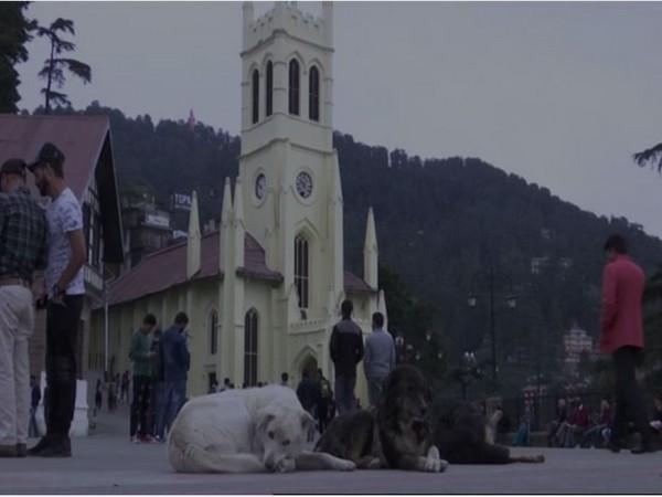 Stray dogs in Shimla. Photo/ANI
