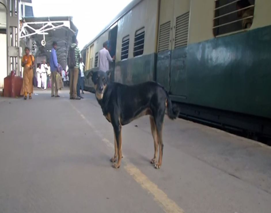 The stray dog at the platform of Park town station in Chennai. Photo/ANI