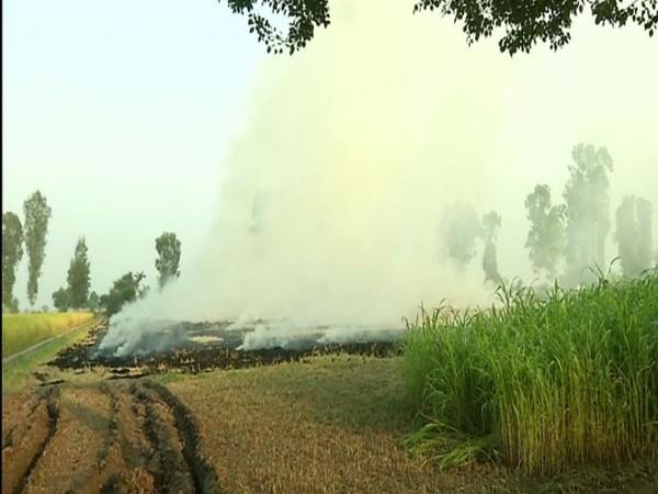 Farmers burning crop residue in Fatehabad, Haryana [Photo/ANI]