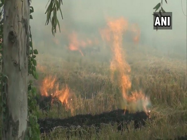 Farm stubble being burnt in Kaithal district, Haryana, on Saturday. Photo/ANI