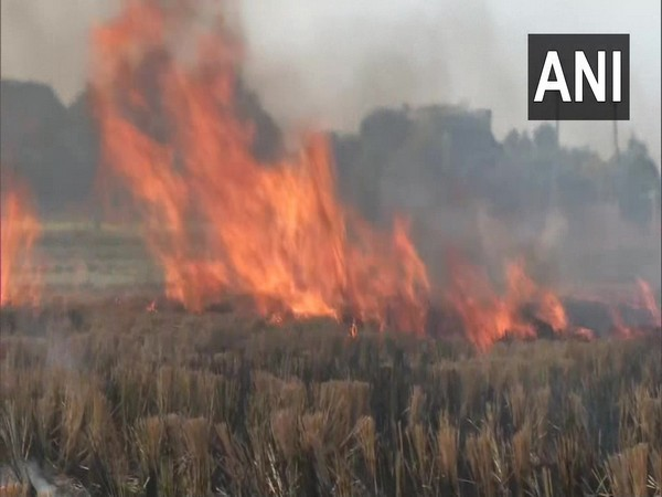 Farmers continue to burn stubble in villages in Ludhiana  (Photo ANI)
