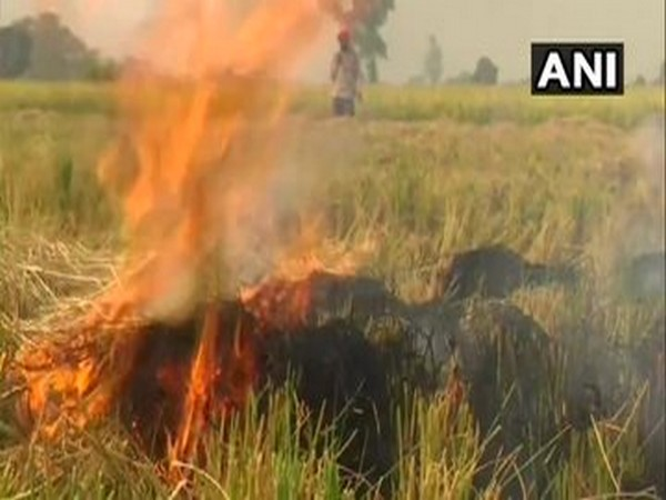 A visual of stubble burning in Punjab's Amritsar.