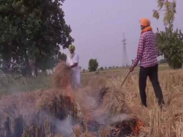 Farmers near Amritsar practice stubble burning on Friday [Photo/ANI]