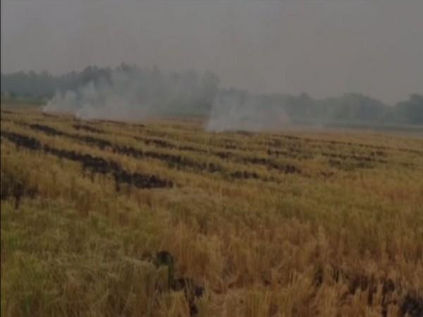Farm fire in Rohtak [Photo/ANI]