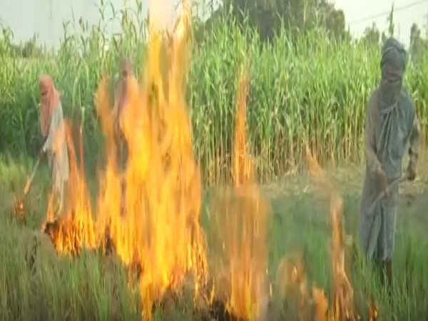 Farmers continue to burn stubble in Tarn Taran (Photo/ANI)