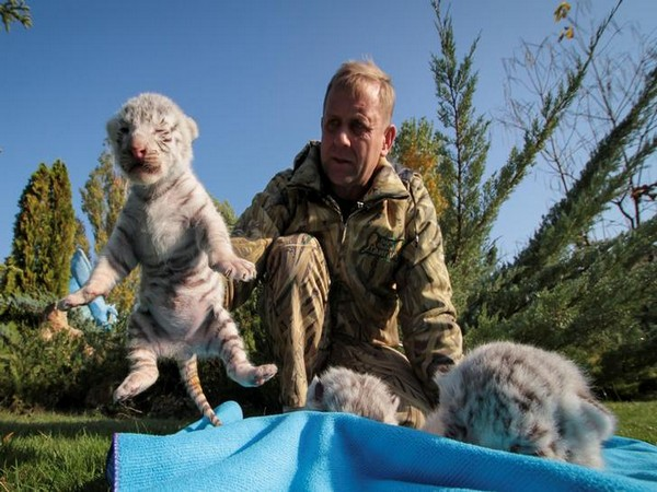 Taigan Safari Park director Oleg Zubkov with White Bengal tiger cubs at the park in Crimea (Photo/Reuters)