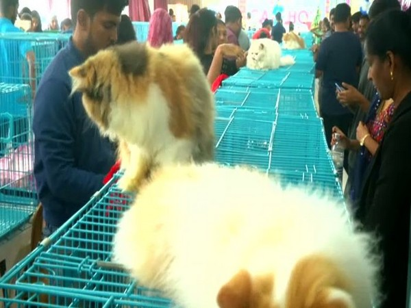 Visuals from the Coimbatore cat show