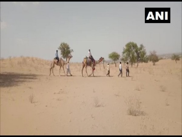 Teachers in Barmer traveling by camel to homes of students in desert areas. (Photo/ANI)
