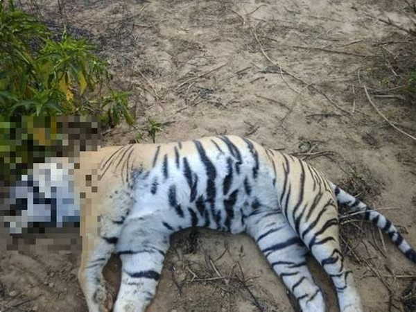 Tiger named 'Dollar' found dead in Rajasthan. Photo/ANI