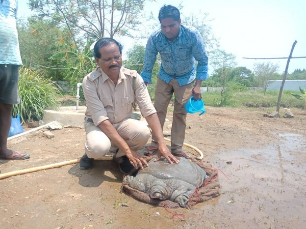 Visuals of turtle in Odisha.