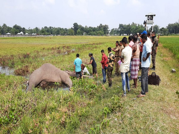 Forest department officials suspect the elephant died due to electrocution in Jalpaiguri on Saturday. Photo/ANI