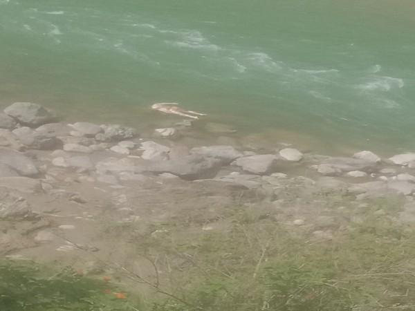 Bodies wash up on shores of Sarayu river in Uttarakhand's Pithoragarh. (Photo/ANI)