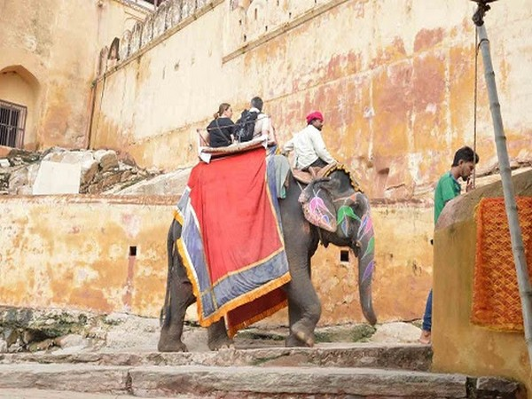Elephants are used to give rides to tourists at Amer Fort, this is cruelty