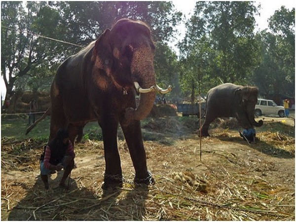 File photo of elephants in Sonepur cattle fair